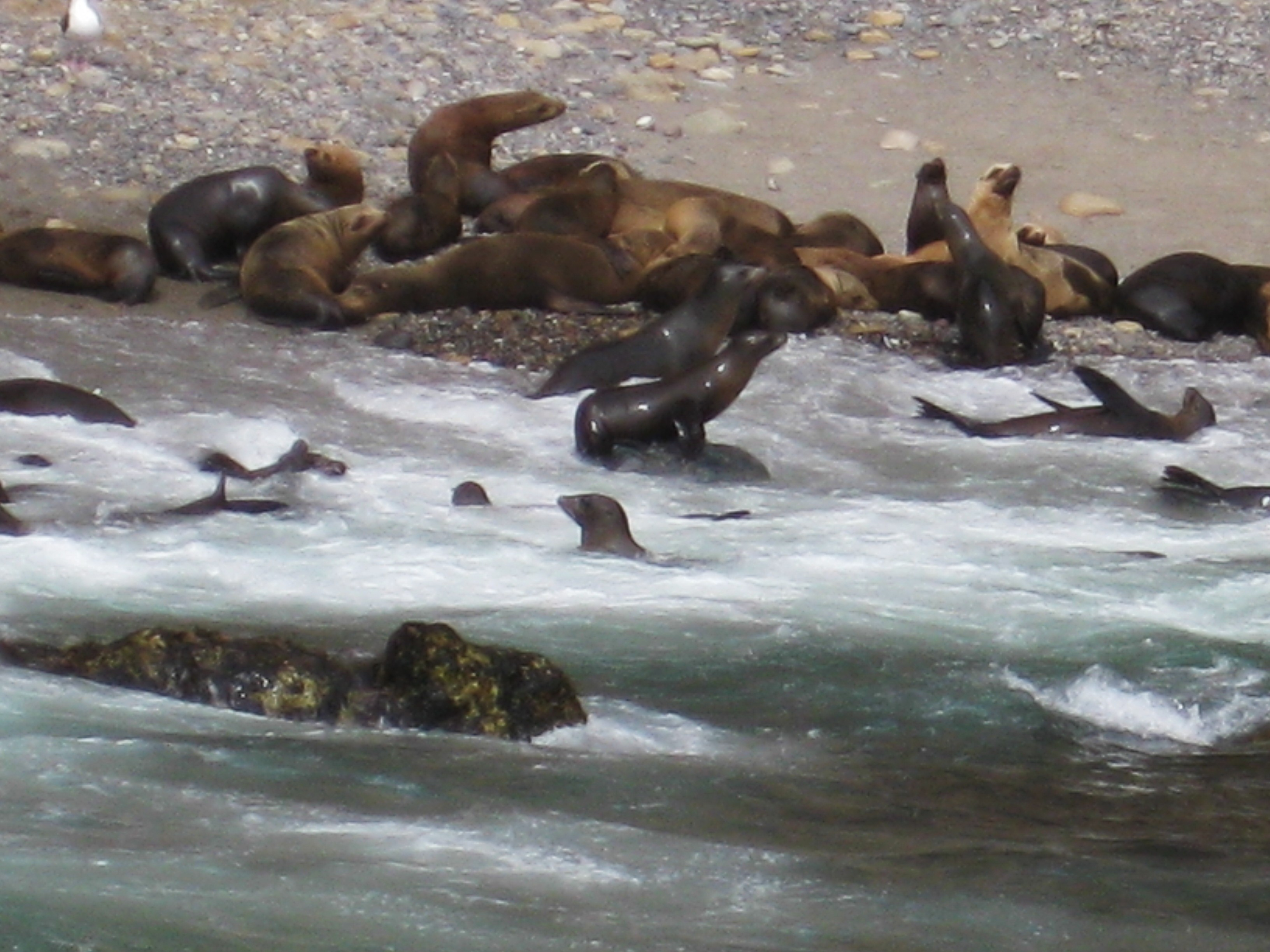 Sea Lion heaven